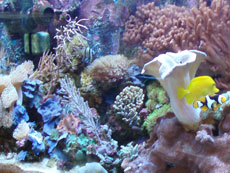 Marine Reef Tank at Hobby Fish